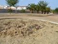 Paquita-torres (7)