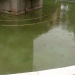 """La alcaldesa confirma que hay orden de limpiar la fuente del """"Paseo"""""""