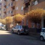El ayuntamiento asegura que una plaga ha atacado los olmos en Bailén