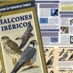 El Museo acoge este viernes la presentación de una guía sobre Halcones Ibéricos