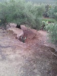 Una de las cuevas de Las Piedras del Cardado. A escasos metros del lugar hay varios restos de tumbas (expoliadas) que he podido contemplar y que los propietarios de la finca nos mostraron