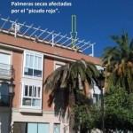 AIB denuncia la proliferación del picudo rojo en las palmeras de la localidad
