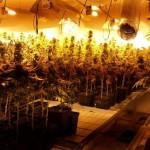 Desmantelado un laboratorio de droga en una vivienda ocupada
