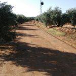 El ayuntamiento anuncia el arreglo de tres caminos rurales