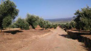 Camino Juncal