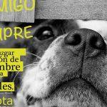 Juventudes Socialistas de Bailén pone en marcha una campaña para el cuidado de los animales